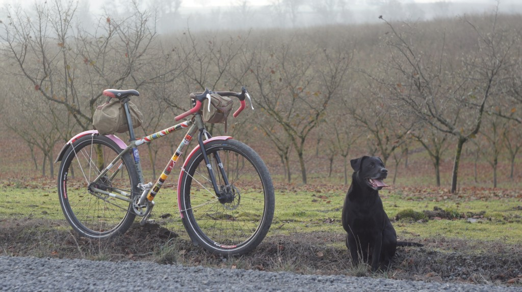 black dog with her tongue out, funky bike with pink fenders