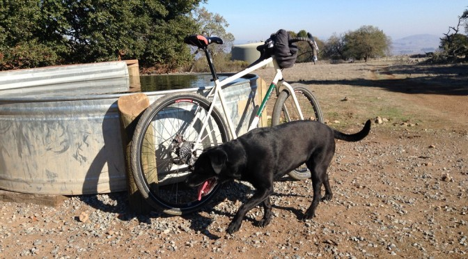 Dog and bike at the cattle trough